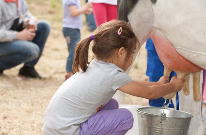 Freda's milking parlour