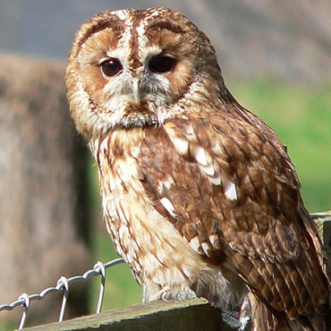 Just Owls Two Day Course