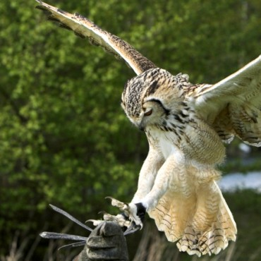 Falconry Courses