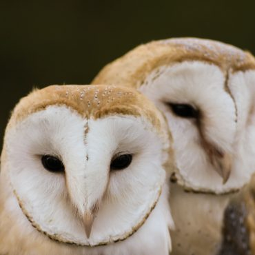 Afternoon Tea with Owls – July 23rd, August 6th & 20th 12.00pm & 2.00pm