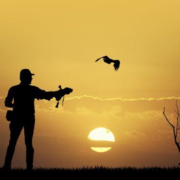 Hawk at Dawn