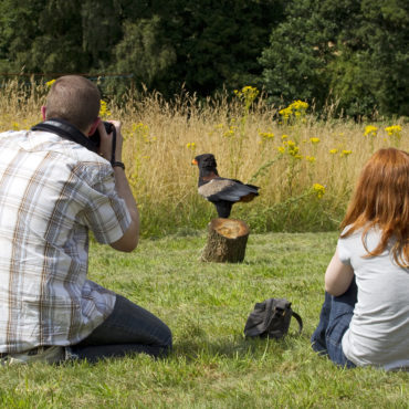 Beasts & Birds Photography Training Workshop July 14th & September 4th 9.30am – 4.00pm