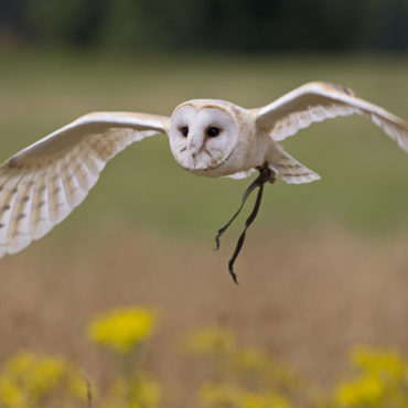 Summer Evening with Owls – July 8th