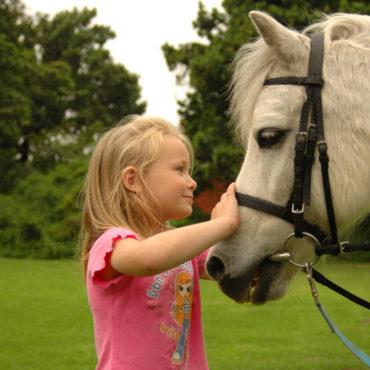 Pony Rides – Starting September 4th